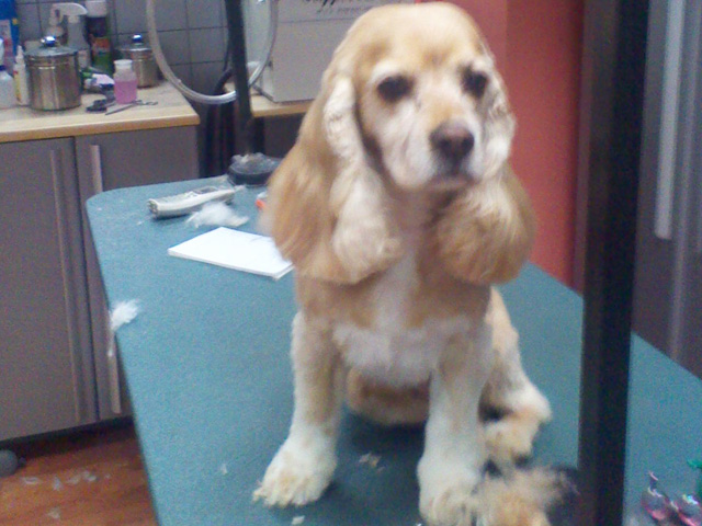 Groomer longmont dog grooming cat grooming paws 2 groom grooming gallery we love our 4 legged customers solutioingenieria